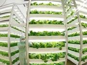Un groupe japonais se lance dans un centre de culture de légumes bio à Ha Nam