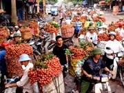 Bac Giang : pour mieux appliquer les technologies dans l'agriculture