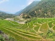 La beauté des rizières en terrasse à Lai Chau à la période des semis