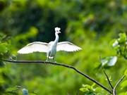 Ninh Binh renforce la conservation de la nature et la préservation de la biodiversité
