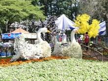 La Fête des fleurs du printemps 2019 s'ouvre à Ho Chi Minh-Ville