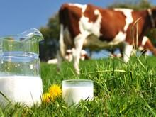 Vietnam Dairy : bientôt la 2e édition à Hô Chi Minh-Ville