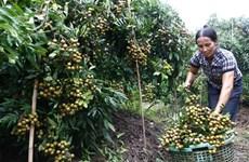 Hung Yên développe l'économie fermière