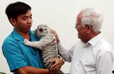 Trois magnifiques bébés tigres blancs naissent au Vietnam