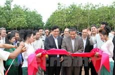 Les entreprises vietnamiennes de caoutchouc fonctionnent bien au Cambodge