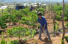 Tay Nguyen : 53 localités satisfont aux critères de la Nouvelle ruralité
