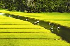 Nouvelle reconnaissance pour Ninh Binh
