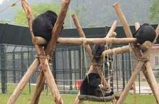 2020 : mettre fin à l'utilisation de la bile d'ours dans la médecine traditionnelle