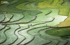 Une photo sur les rizières en terrasses dans le top 10 d'un concours international