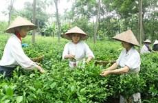 Les campagnes de Hanoi à l'heure de l'intégration