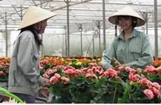 Russie, nouveau débouché prometteur pour les fleurs de Da Lat