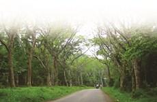 Parc national de Cuc Phuong, la biodiversité grandeur nature