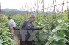 Le TPP donnera un nouvel essor à l'agriculture vietnamienne