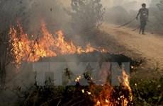 Incendies en Indonésie : le nombre de « points chauds » a diminué