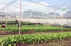 Dong Nai: une ferme de légumes aux normes de l'agriculture bio européennes et américaines
