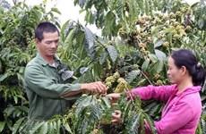 Les exportations de café bien transformé en forte croissance