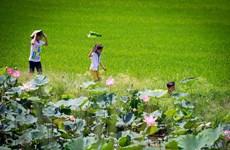 Vietnam - Pays-Bas : coopération entre la province de Dông Tháp et la ville d'Emmen