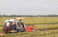 Bond des exportations nationales de riz en novembre