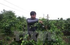 Le PNUD aide le Vietnam à construire un nouveau modèle de croissance