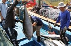 Egypte, débouché prometteur pour le thon vietnamien