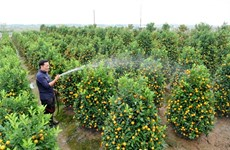 Cultivateur de kumquats et pêchers, un métier anxiogène