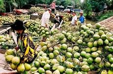 Produits à base de noix de coco : 30% des exportations de Bên Tre