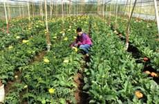 L'agriculture attire de plus en plus les investisseurs japonais