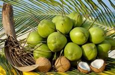 Bên Tre: Les produits à base de coco sont prisés en Asie