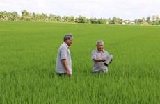 Plus de 6 millions de tonnes de riz exportées en 2015