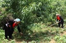 Faciliter l'accès au foncier forestier pour les ethnies minoritaires
