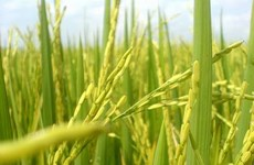 Application du SIG dans le développement agricole et rural