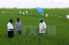 Application de 46 normes internationales sur la production durable du riz au Vietnam