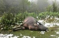 Lourdes pertes dans diverses localités à cause du froid