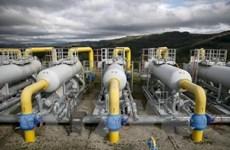 Tokyo Gas du Japon veut investir dans la province de Ha Nam