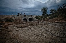 Près de 42.000 ha de cultures frappés par la sécheresse dans le Centre et le Tây Nguyen