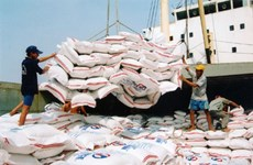 Forte croissance des exportations de riz au début de l'année