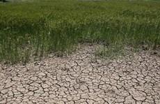 Thaïlande : la sécheresse pourrait coûter 0,8 % du PIB national