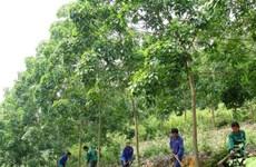 JICA aide la région du Tay Bac dans la gestion durable des ressources naturelles
