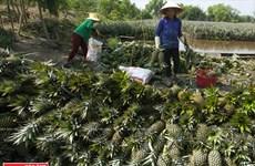Polyculture sur les terres alunées