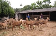 La Nouvelle ruralité et l'établissement des chaînes de production