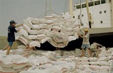 Le riz vietnamien a besoin d'une marque internationale