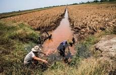 Sécheresse et salinisation : déblocage d'une aide de près de 4 milliards de dongs