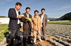 Kawakami, village japonais miraculeux dans l'agriculture, veut coopérer avec le Vietnam