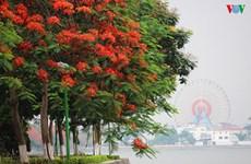 Hanoi aux couleurs de l'été