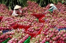 Exportations de plus de 100 tonnes de fruits de dragon en Thaïlande
