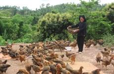 Bac Giang s'efforce de baisser de 2 % par an son taux de pauvreté