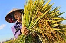 Notre bol de riz