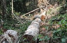 L'appel de la forêt du Tây Nguyên