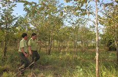 Forêts : taux de couverture de près de 41%.