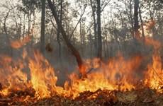 L'Indonésie en alerte contre les fumées d'incendies
